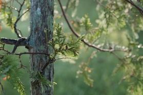 BKerton - Evergreen photo